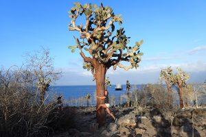 wanderlotje 150 jaar oude cactus knuffelen